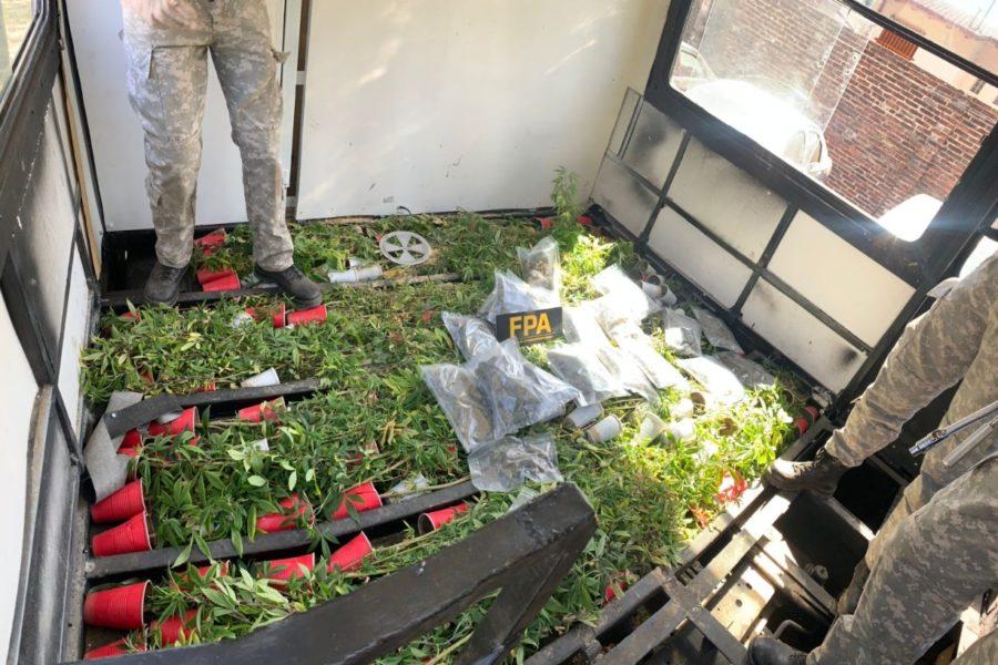 Río Segundo: FPA secuestra armas de fuego, un kilo de marihuana y más de 200 plantas de cannabis