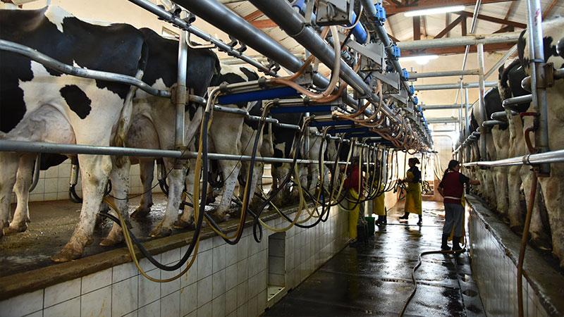 Lanzaron oficialmente el proyecto para productores de leche de baja escala